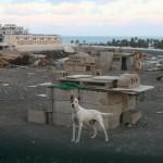 JUNKJARD DOGS